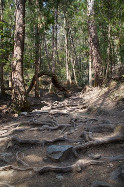 다산초당으로 가는 길. 소나무 뿌리가 만들어낸 길이 인상적이다.