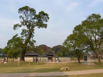 해미읍성의 호야나무와 복원된 옥사 모습.