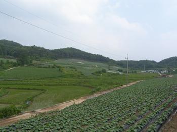 포산리 마을회관에서 마을 입구 산길 쪽을 바라본 풍경.