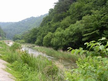 갈전 관리초소 앞을 흐르는 왕피천 풍경.
