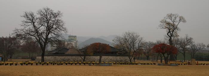해미 읍성 서문 위 지성루에서 본 호야나무(오른쪽)와 옥사 모습.