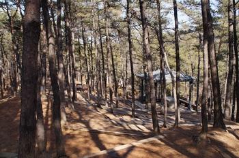 숲 속에 마련된 야외제대.